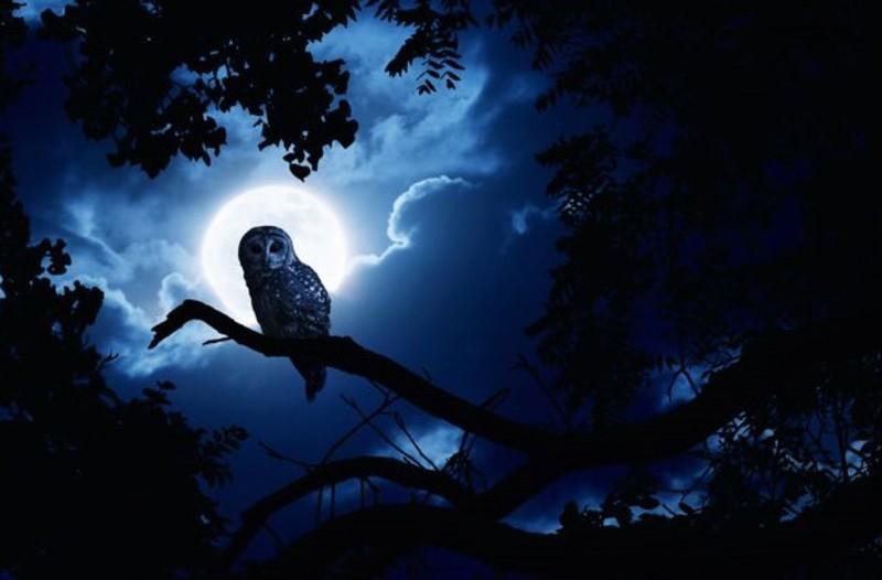 Ночные мысли